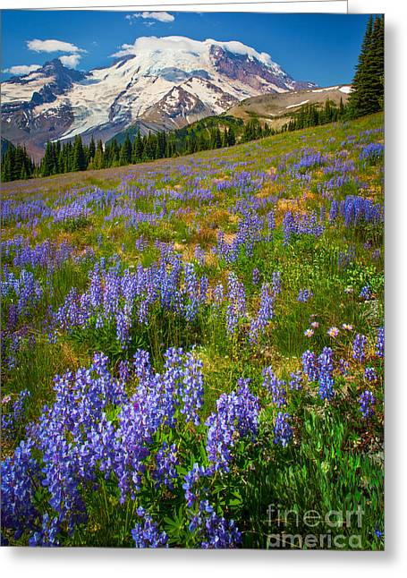 Snow Blossom Greeting Cards - Sunrise Meadow Greeting Card by Inge Johnsson