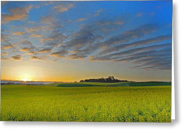 Fyn Greeting Cards - Sunrise Mustard Greeting Card by Robert Lacy