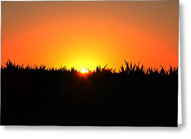 Amish Digital Art Greeting Cards - Sunrise Over Corn Field Greeting Card by Bill Cannon