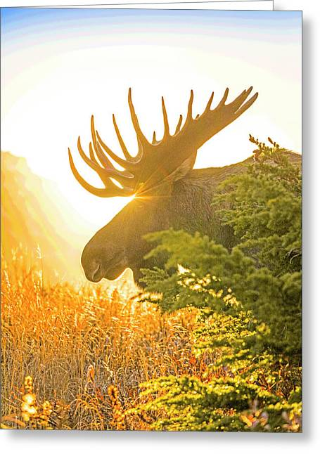 Sunrise Silhouette Abstract Greeting Card by Tim Grams