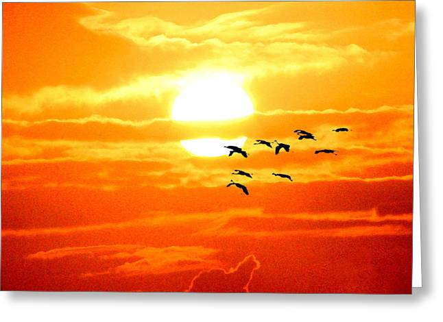 Surfing Art Mixed Media Greeting Cards - Sunrise / sunset / Sandhill Cranes Greeting Card by W Gilroy