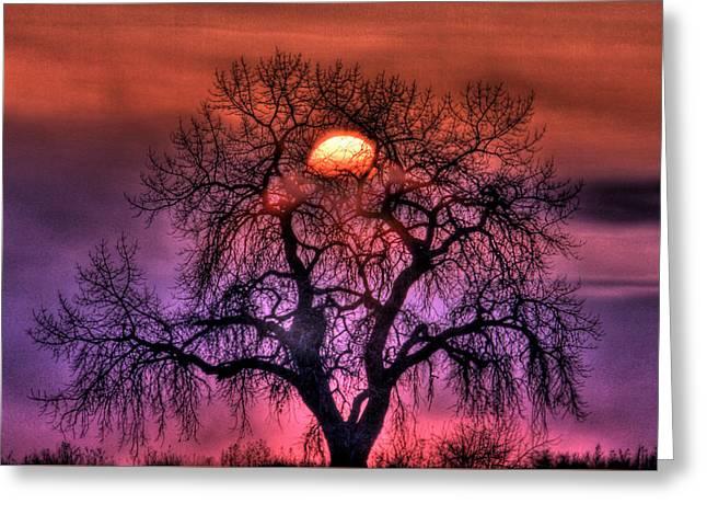 Sunrise Through The Foggy Tree Greeting Card by Scott Mahon