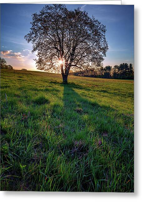 Sunrise Through The Tree Greeting Card by Rick Berk