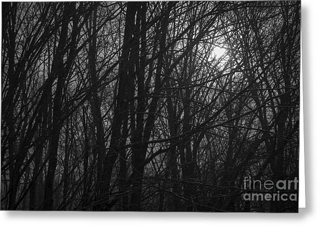 Sunrise Greeting Cards - Sunrise Through the Trees Greeting Card by Diane Diederich