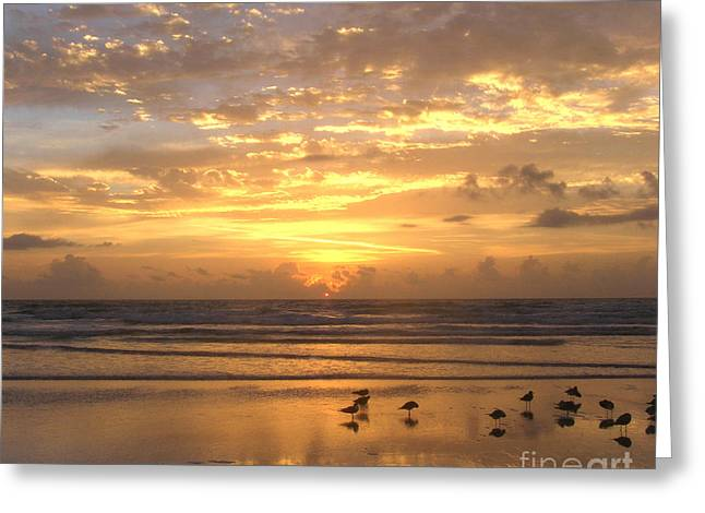 Seabirds Greeting Cards - Sunrise with birds 2   5-26-15 Greeting Card by Julianne Felton