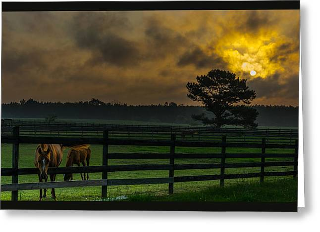 Field. Cloud Tapestries - Textiles Greeting Cards - Sunrise with horses Greeting Card by James Hennis