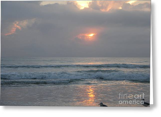 Seabirds Greeting Cards - Sunrise with seagulls Greeting Card by Julianne Felton