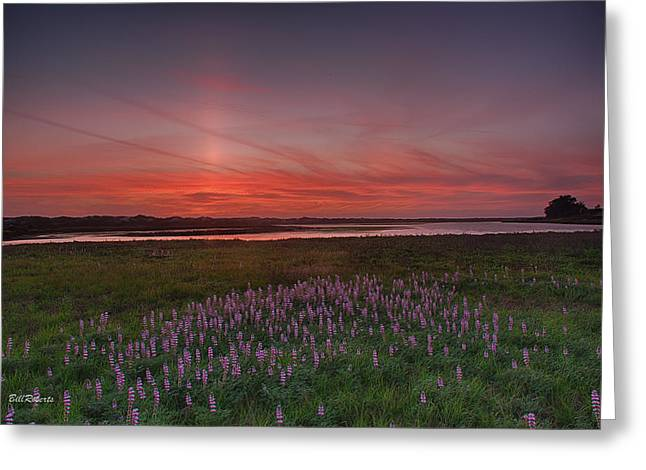 Sloughs Greeting Cards - Sunset and Lupine Greeting Card by Bill Roberts