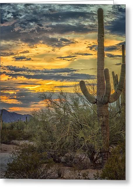 Fishhook Greeting Cards - Sunset Approaches - Arizona Sonoran Desert Greeting Card by Jon Berghoff