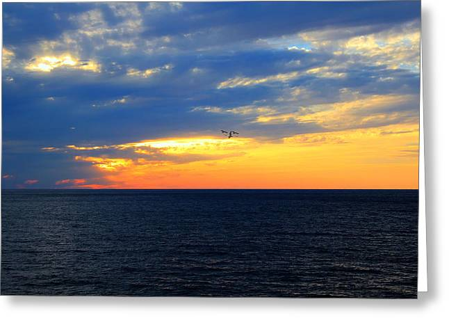 Stewards Greeting Cards - Sunset at Sail Away Greeting Card by Shelley Neff