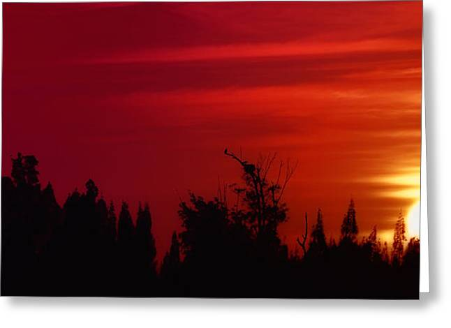 Osprey Pyrography Greeting Cards - Sunset at Wabaso Greeting Card by Angel H Juarbe