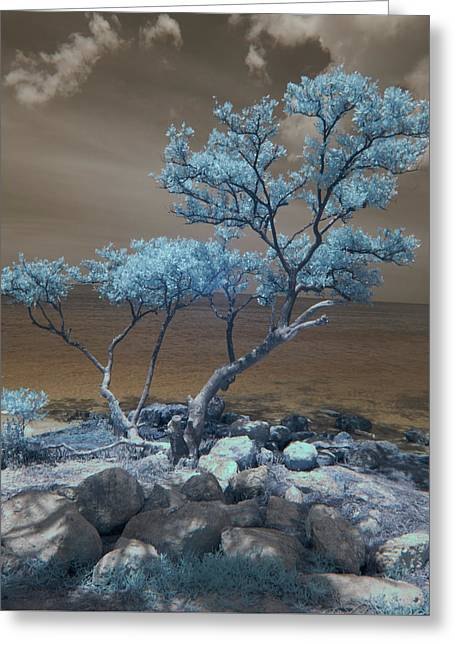 Sunset Beach Greeting Card by Jim Cook