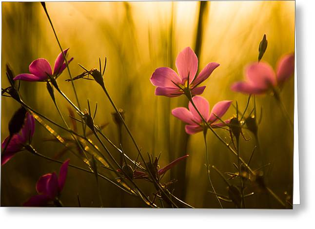 Sunset Beauties Greeting Card by Parker Cunningham