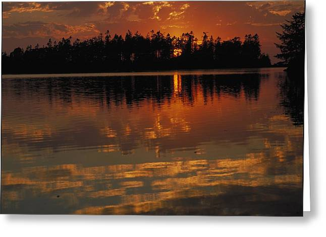 Ocean Shore Greeting Cards - Sunset Behind The Trees On A Lake Greeting Card by Ink and Main