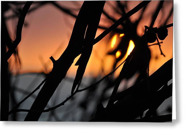 Californian Greeting Cards - Sunset Between Twigs Greeting Card by Esther  Wilson