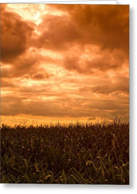 Sunset Corn Field Greeting Card by Wim Lanclus