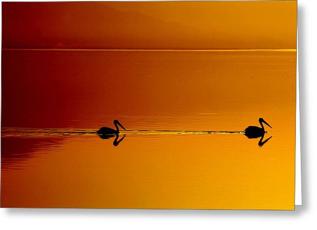 Sunset Cruising Greeting Card by Laurie Search