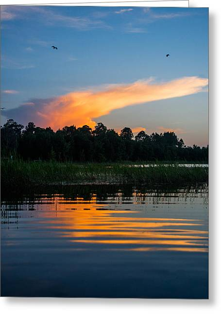 Sunset Flight Greeting Card by Parker Cunningham