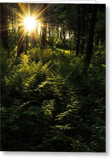 Moss Greeting Cards - Sunset In The Forest. Greeting Card by Daniel Kay