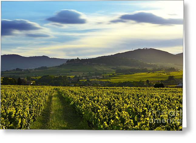 Gamay Photographs Greeting Cards - Sunset lights over vineyards and mountains of Beaujolais Greeting Card by Gael Fontaine
