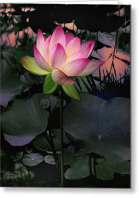 Sunset Lotus Greeting Card by Jessica Jenney