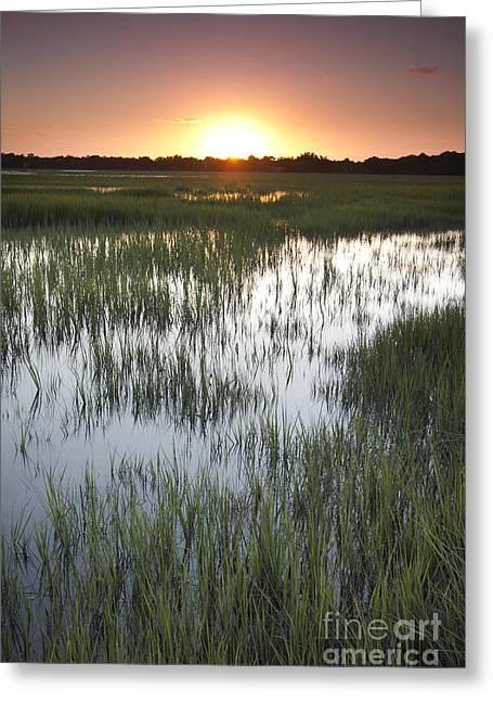 Charleston Greeting Cards - Sunset Marsh Grass Greeting Card by Dustin K Ryan