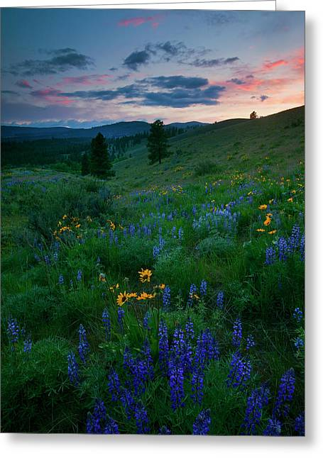 Meadown Greeting Cards - Sunset Meadow Trail Greeting Card by Mike  Dawson