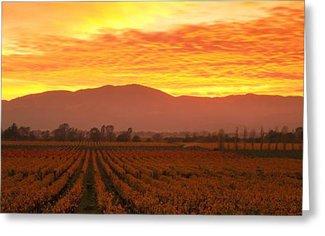 Grapevine Greeting Cards - Sunset, Napa Valley, California, Usa Greeting Card by Panoramic Images