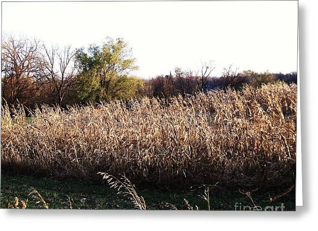 Sunset On Amber Waves Of Grain Greeting Card by Marsha Heiken