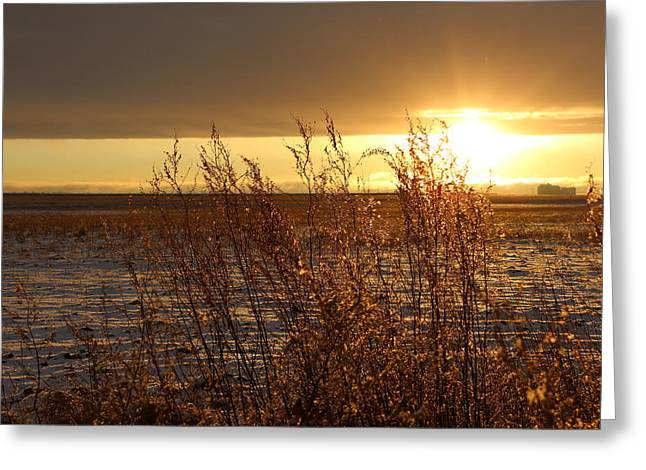Sunset Prints Greeting Cards - Sunset On Field Greeting Card by Christy Patino