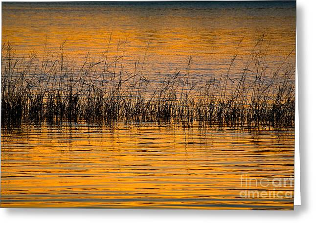 Wild And Scenic Greeting Cards - Sunset on  Merrymeeting Bay Greeting Card by Susan Cole Kelly