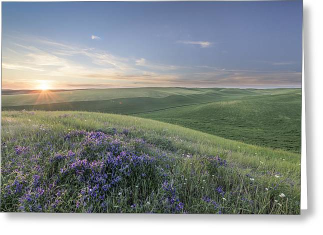 Fine Art Flower Photography Greeting Cards - Sunset on the Farm Greeting Card by Jon Glaser