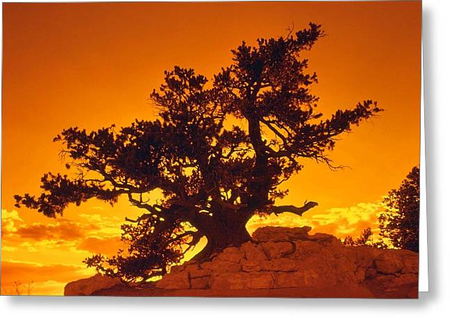 Silhouette Of Tree Greeting Cards - Sunset on the North Rim Greeting Card by John Foote