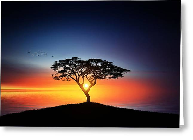 Sunset On The Tree Greeting Card by Bess Hamiti