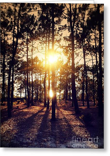 Sunset On Trees Greeting Card by Carlos Caetano