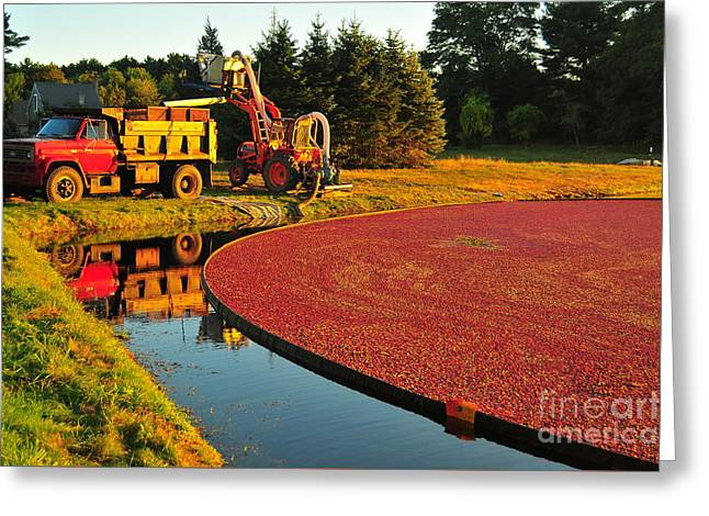 Sunset Over Cranberry Bog Greeting Card by Catherine Reusch  Daley