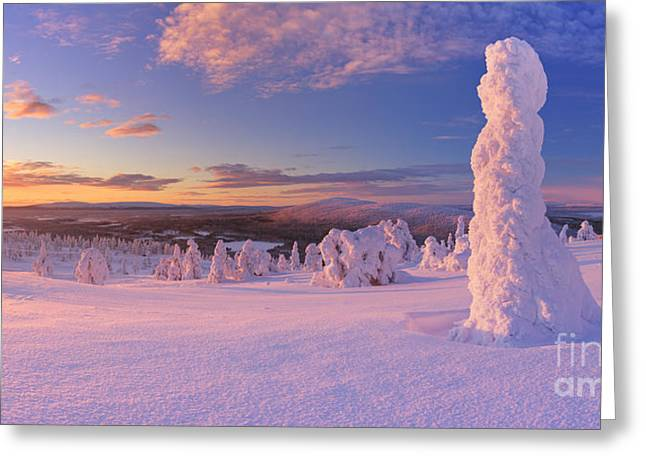 Snow Scene Landscape Greeting Cards - Sunset over frozen trees on a mountain in Finnish Lapland Greeting Card by Sara Winter
