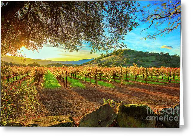 Sunset Over The Gamble Vineyard Greeting Card by Jon Neidert