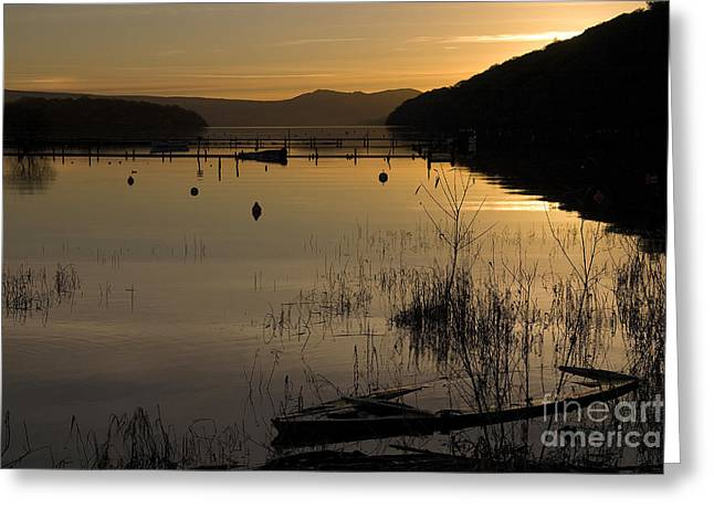 Sunset Over The Lake Greeting Card by Carole Lloyd