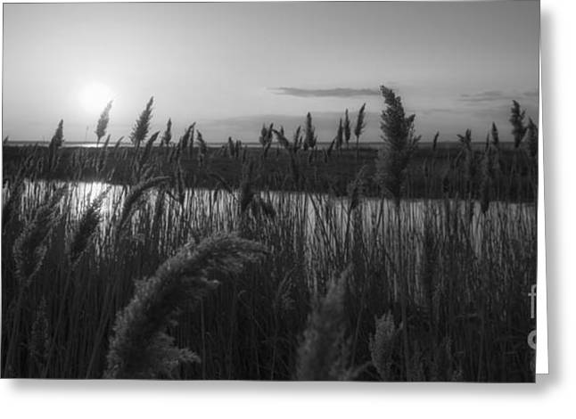 Best Ocean Photography Greeting Cards - Sunset Over The Marsh BW Greeting Card by Michael Ver Sprill