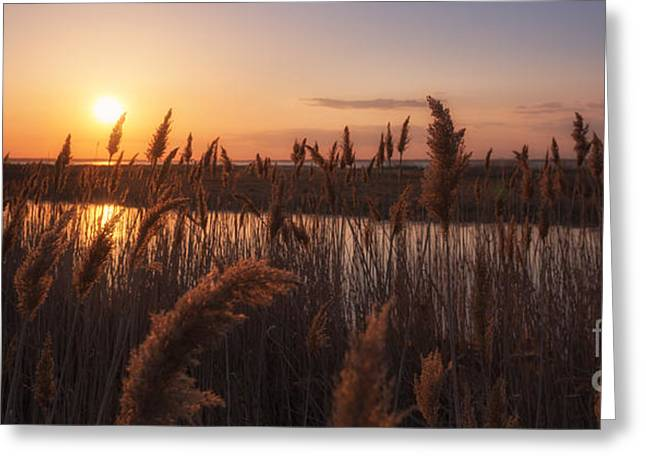Best Ocean Photography Greeting Cards - Sunset Over The Marsh Greeting Card by Michael Ver Sprill