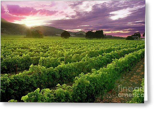 Sunset Over The Vineyard Greeting Card by Jon Neidert