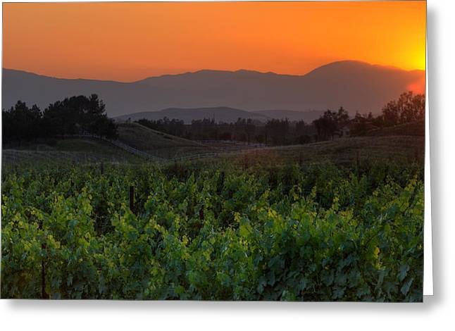 California Vineyard Greeting Cards - Sunset over the Vineyard Greeting Card by Peter Tellone