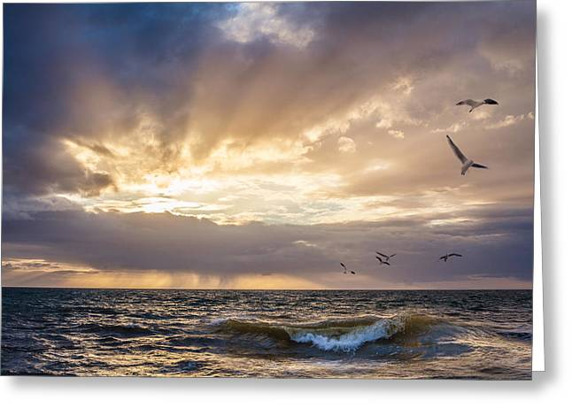 Flying Seagull Greeting Cards - Sunset over water with birds - Biblical Scene Greeting Card by Greg Brave