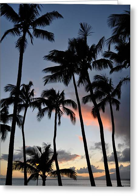 Sunset Palms Greeting Card by Kelly Wade