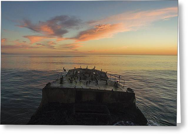 Sunset Perch Greeting Card by David Levy