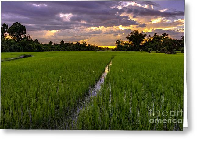 Sunset Rice Fields In Cambodia Greeting Card by Mike Reid