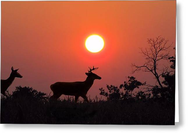Hunting Cabin Greeting Cards - Sunset Silhouette Greeting Card by David Dehner