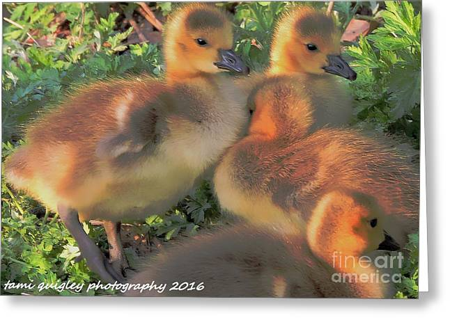 Sunset Snuggle Greeting Card by Tami Quigley