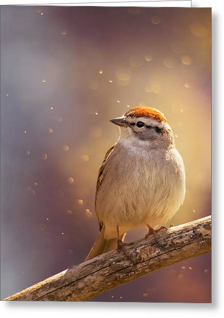 Chipping Sparrow Greeting Cards - Sunset Sparrow Greeting Card by Bill Tiepelman